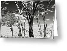 Acacia Tones Greeting Card
