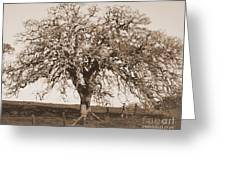 Acacia Tree In Sepia Greeting Card