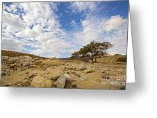 Acacia Tree In The Desert Greeting Card