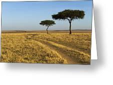 Acacia Trees In The Maasai Mara Greeting Card by Nigel Hicks