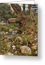 Acadia Fall Foliage Greeting Card