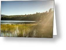 Acadia National Park Shoreline In Evening Sun Greeting Card
