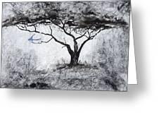Acasia Tree Greeting Card