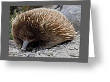 Accidner At Cradle Mountain Greeting Card