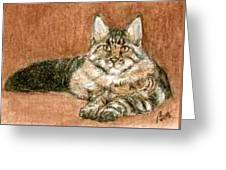 Aceo Maine Coon Cat Greeting Card