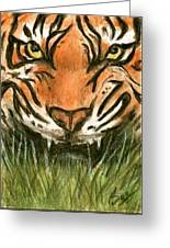 Aceo Tiger Greeting Card