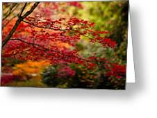 Acer Colors Greeting Card