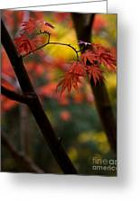 Acer Finish Greeting Card