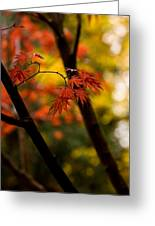 Acer Silhouette Greeting Card