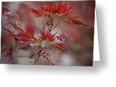 Acer Storm Redux Greeting Card