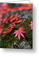 Acers Fallen Greeting Card