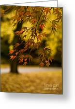 Acers Turning Greeting Card