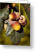 Acorn Cluster Greeting Card