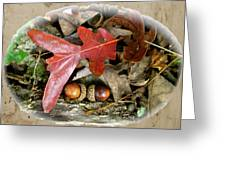 Acorns And Oak Leaves Greeting Card