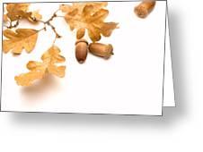 Acorns And Oak Leaves Greeting Card by Utah Images