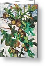 Acorns On An Oak  Greeting Card
