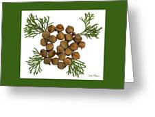 Acorns With Cedar Greeting Card