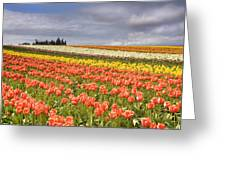 Across Colorful Fields Greeting Card by Mike  Dawson