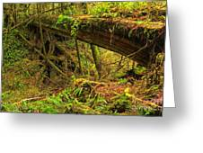 Across The Ravine Greeting Card