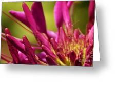 Actiniaria Greeting Card