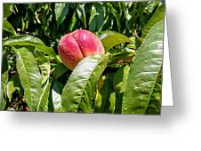 Adams County Peach Greeting Card