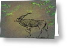 Addax Antelope Greeting Card