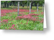 Adding A Splash Of Color-indian Paintbrush In Texas Greeting Card