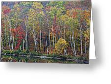 Adirondack Birch Foliage Greeting Card