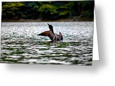 Adirondack Loon 4 Greeting Card