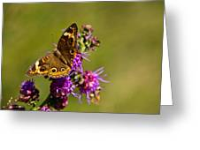 Admiral Butterfly  Greeting Card by Douglas Barnett