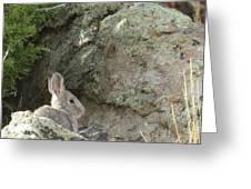 Adobetown Bunny Greeting Card