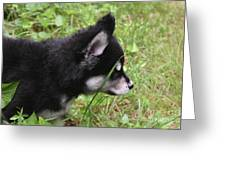 Adorable Alusky Pup Creeping Through Tall Blades Of Grass Greeting Card