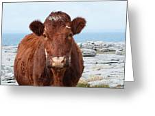 Adorable Brown Cow Standing On The Burren Greeting Card