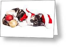 Adorable Christmas Calico Santa Kitty Greeting Card