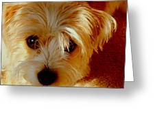 Adorable Daisy Greeting Card