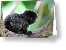 Adorable Goeldi's Marmoset In A Tree Greeting Card