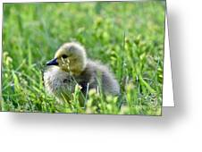 Adorable Goose Chick Greeting Card