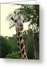 Adorable Grinning Giraffe Greeting Card