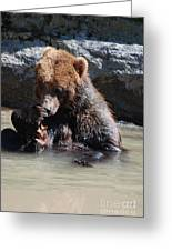 Adorable Grizzly Bear Playing With A Maple Leaf While Sitting In Greeting Card