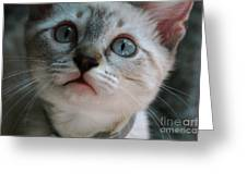 Adorable Kitty  Greeting Card