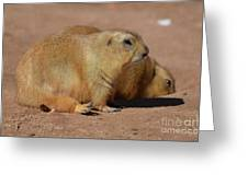 Adorable Pair Of Chubby Black Tailed Prairie Dogs Greeting Card