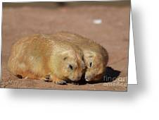 Adorable Pair Of Prairie Dogs Cuddling Together Greeting Card
