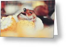 Adorable Tiny Hamster Pet Feasting On Corn Greeting Card