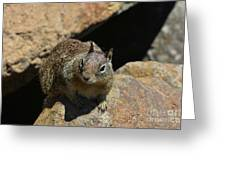 Adorable Up Close Look Into The Face Of A Squirrel Greeting Card