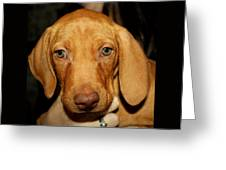 Adorable Vizsla Puppy Greeting Card