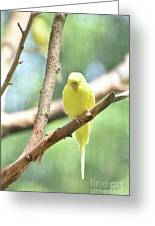 Adorable Yellow Budgie Parakeet Relaxing In A Tree Greeting Card