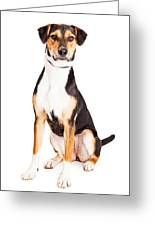Adorable Young Mixed Breed Puppy Dog Greeting Card