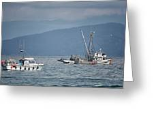 Adriatic Star And Ryan D Greeting Card