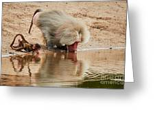 Adult Baboon And Baby Together On The Waterfront  Greeting Card