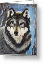 Adult Grey Wolf Greeting Card by David Hawkes